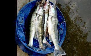 Ako rybať z brehu rieky