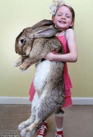 Plemeno králika
