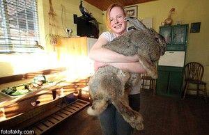 Ktoré plemená králikov sú lepšie na chov?