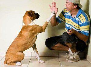 Správny výcvik psov doma