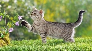 Liečba mačiek