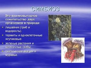 Symbióza v živočíšnom svete