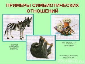 Príklady symbiózy