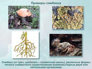Symbióza v prírode