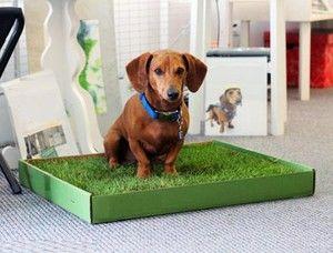 Vyučujeme psy na podnos v podmienkach apartmánu