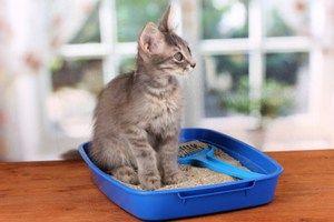 Zvyknutí mačiatko na zásobník