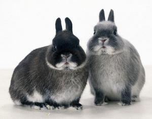 Starnutie králikov