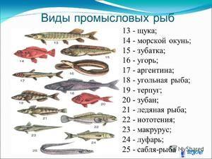 Hodnota komerčných rýb