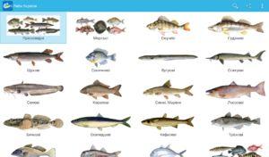 Komerčné ryby