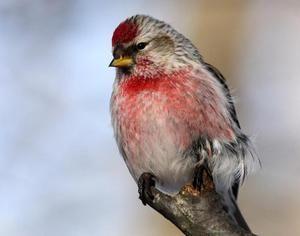 Malý vták