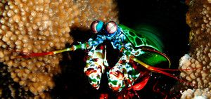Pohľad na rakovinu mantisu