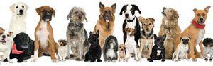 Rozmanitosť psích plemien: mená, fotografie, tipy
