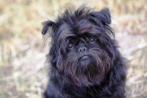 Plemená psov a ich odroda