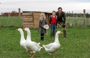 Chov a pestovanie husi doma: odkiaľ začať, pravidlá chovu