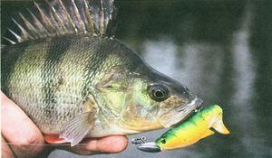 Opis rýb