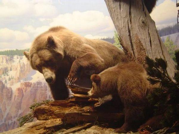 Jaskynný medveď s potomkami