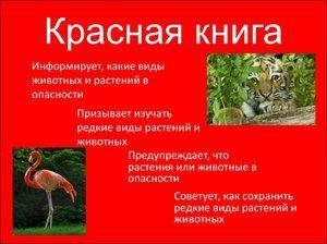 Obsah červenej knihy