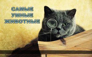 Ktoré zvieratá sú najinteligentnejšie