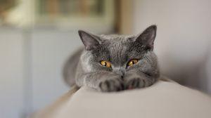 Hodnotenie krmív pre prémie mačiek