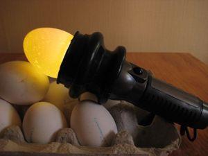 Kontrola vajec škrupiny vajec