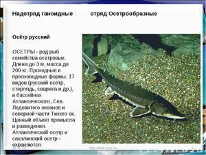 Výživová hodnota jeseterových rýb