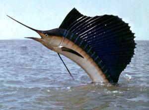 Rybárske plavidlo