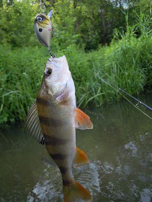 Charakteristiky lovu na rieke Kirovskej oblasti