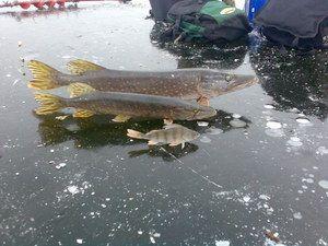 Znaky zimného rybolovu vo vodách Togliatti