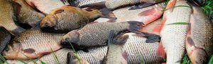 Rozvrh a predpoveď rybieho skusu
