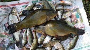 Ryby vo vodách Vitebsk