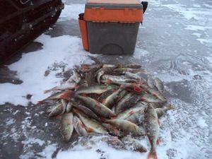 Rybolov v oblasti Vologda