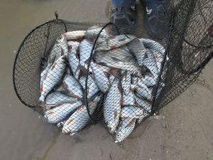 Druhy rýb v Oka