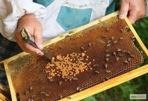 Kde začať chov včiel doma od nuly