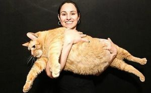 Kočka Himmi je najsilnejšia na svete