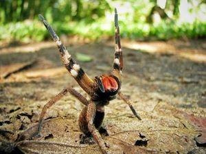 Dôsledky kousnutia jedovatého pavúka