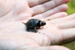 Najmenšie zvieratá na svete