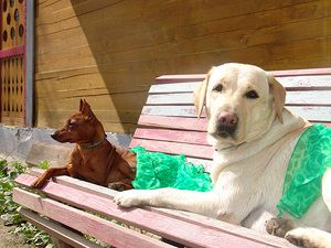 Najobľúbenejšie plemená psov