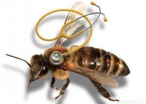 Najčastejšie choroby včiel a ich liečba