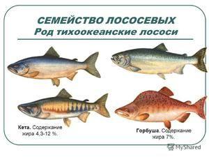 Charakteristika lososov