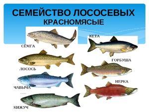 Aký druh lososovej rodiny rýb
