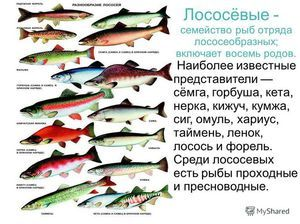 Ako určiť druh rýb