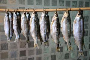 Použitie rýb shamaika