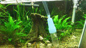 Sifón na čistenie akvária. Typy akváriových sifónov a odporúčania
