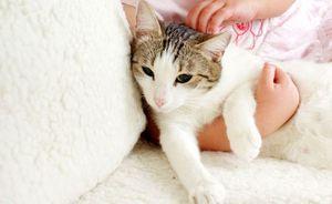 Symptómy infekcie, dôsledky a metódy liečby červov u mačiek