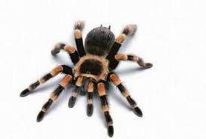 Koľko nohy má pavúk a prečo to nie je tak jasné