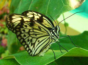 Koľko motýľov má nohy. Počet končatín
