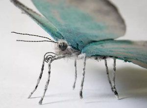Variácia motýľa