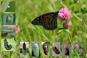 Motýle podľa želania