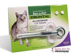 Laxatívum pre mačky doma