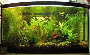 Obsah kolien v spoločnom akváriu